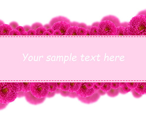 Beautiful aster flowers and card with space for your text