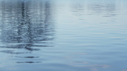 Surface of a lake with reflections of trees