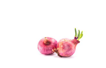 Red Shallots on isolated White Background