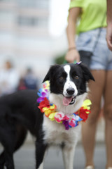 Dog in Bright Colors Rio Animal Carnival