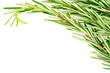 Background texture of organic rosemary bunch on white with copys