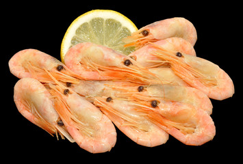 Cooked Cold Water Prawns