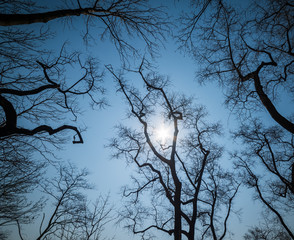 Leafless branches on sky background. Wide angle lens shot.