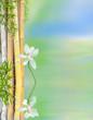 décor relaxant aquatique, bambous et lotus blanc