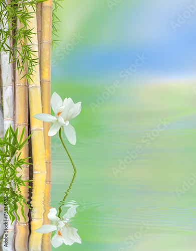 Foto op Canvas Lotusbloem décor relaxant aquatique, bambous et lotus blanc
