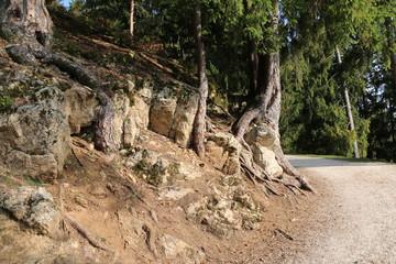 Baumstumpf im Wald neben Straße