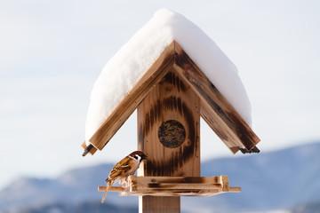 frecher Spatz im Vogelhaus