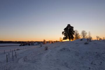 Solnedgång_vikingahög