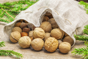 Walnuts with hazelnuts in linen bag with fir branches around