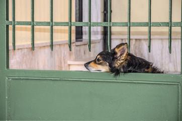 Cane in attesa