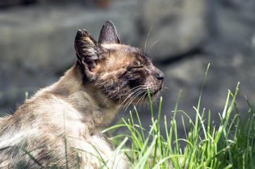 Gatto a riposo che prende il sole