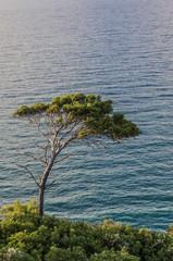 Albero di vedetta sulla costa