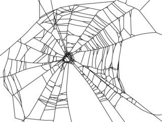 old black web isolated on white
