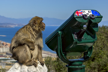 monkey near the telescope on the background of the bay. Gibralta