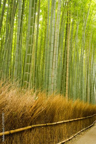 In de dag Bamboe Bamboo forest in Arashiyama, Kyoto