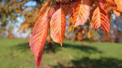 Herbstblätter im Wind