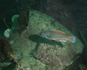 Norway underwater sea diving video