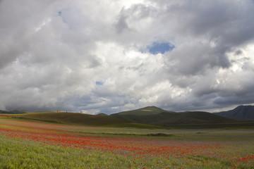 Casteluccio di Norcia,fioritura della lenticchia, campo fiorito
