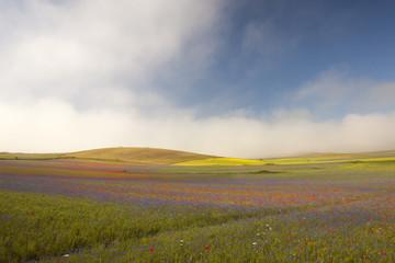 Casteluccio di Norcia, la fioritura della lenticchia, nuvole