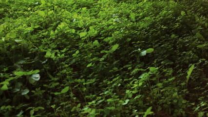 Green grass field wind with sound