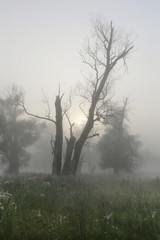deadwood in the oak grove