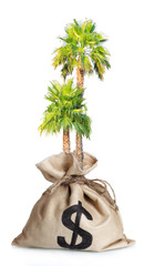 Palm growing in bag with a dollar sign isolated on white