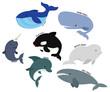 Whale vector set - 75372904
