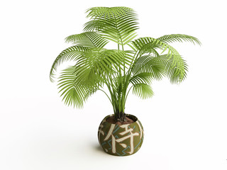 Palm Tree in a Ceramic Flower Pot