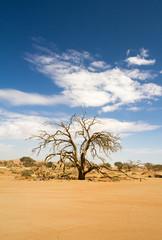 Dead tree in the Sossusvlei desert, Namibia