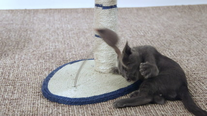 Cute kitten playing with mouse toy on scratching post