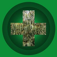 Eucalyptus - Soins - Phytothérapie