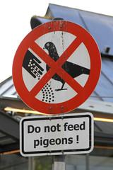 Pigeons feed