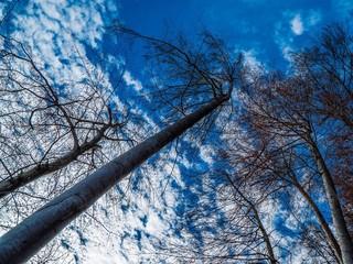 Bäume ragen gen Himmel