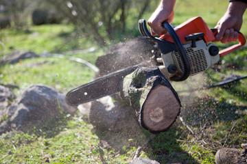 Cutting holm oak firewood with a chainsaw