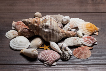 seashells on brown wooden background