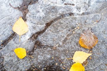 Autumn Leaves ice puddle