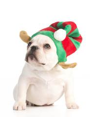 puppy elf