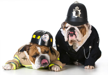 dog firefighter on policeman