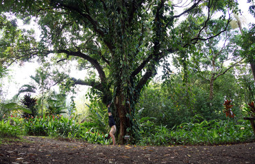 Man Handstands in front of hundred year mango tree