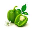 Green bell pepper (bulgarian pepper) on white background
