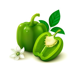 Green bell pepper (bulgarian pepper) on white background