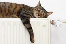 """Постер, картина, фотообои """"A tiger (tabby) cat relaxing on a warm radiator"""""""