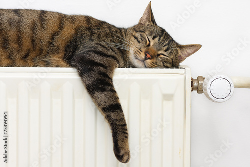 A tiger (tabby) cat relaxing on a warm radiator - 75394954