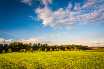 Evening light on a field in rural York County, Pennsylvania.