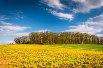 Field in rural York County, Pennsylvania.