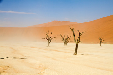 Dead trees in the Sossusvlei desert, namibia
