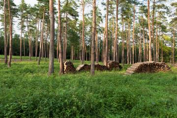 Wald mit Brennholz