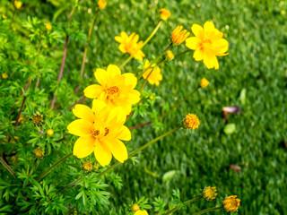 Yellow flower on green
