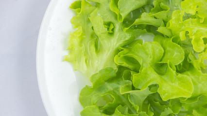closed up of green oak lettuce