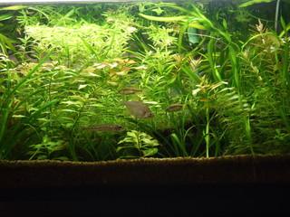 魚の住む水草水槽